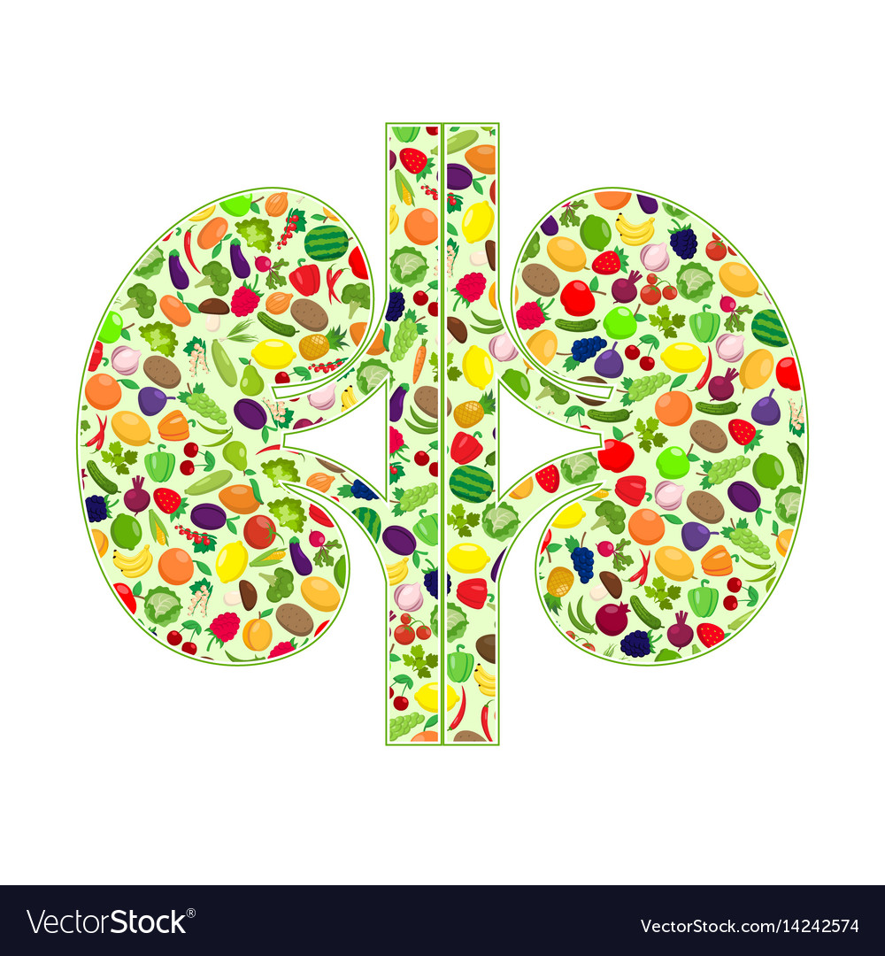 Kidneys healthy silhouette vector image
