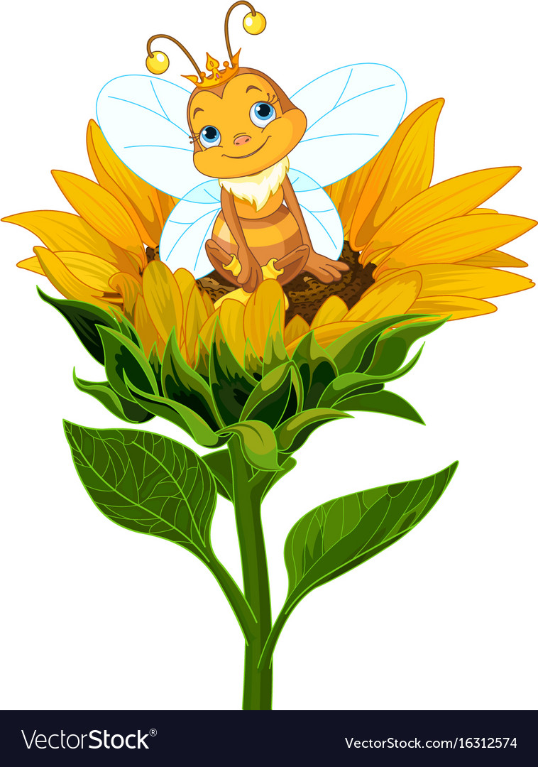 Queen bee on sunflower vector image