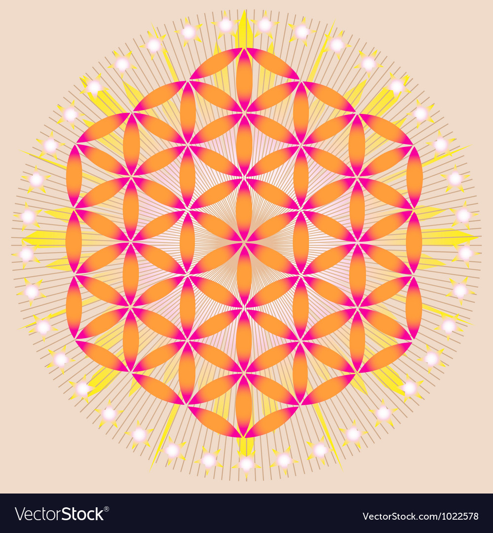 Sacred Geometry flower of life stars vector image