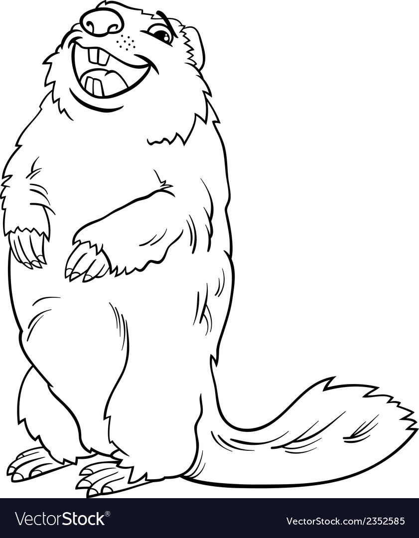 Marmot animal cartoon coloring book vector image
