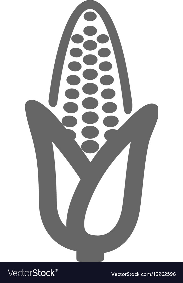 Corn outline icon vegetable vector image
