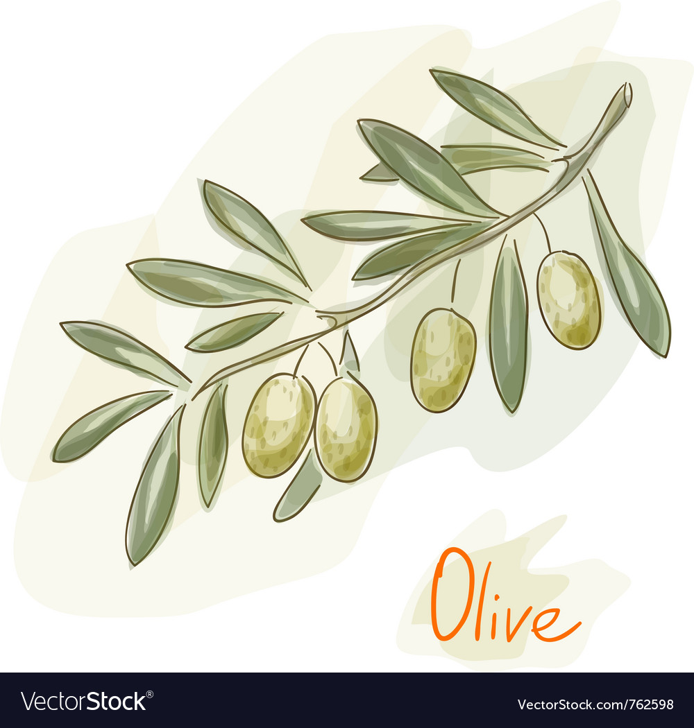 Green olives watercolor style vector image