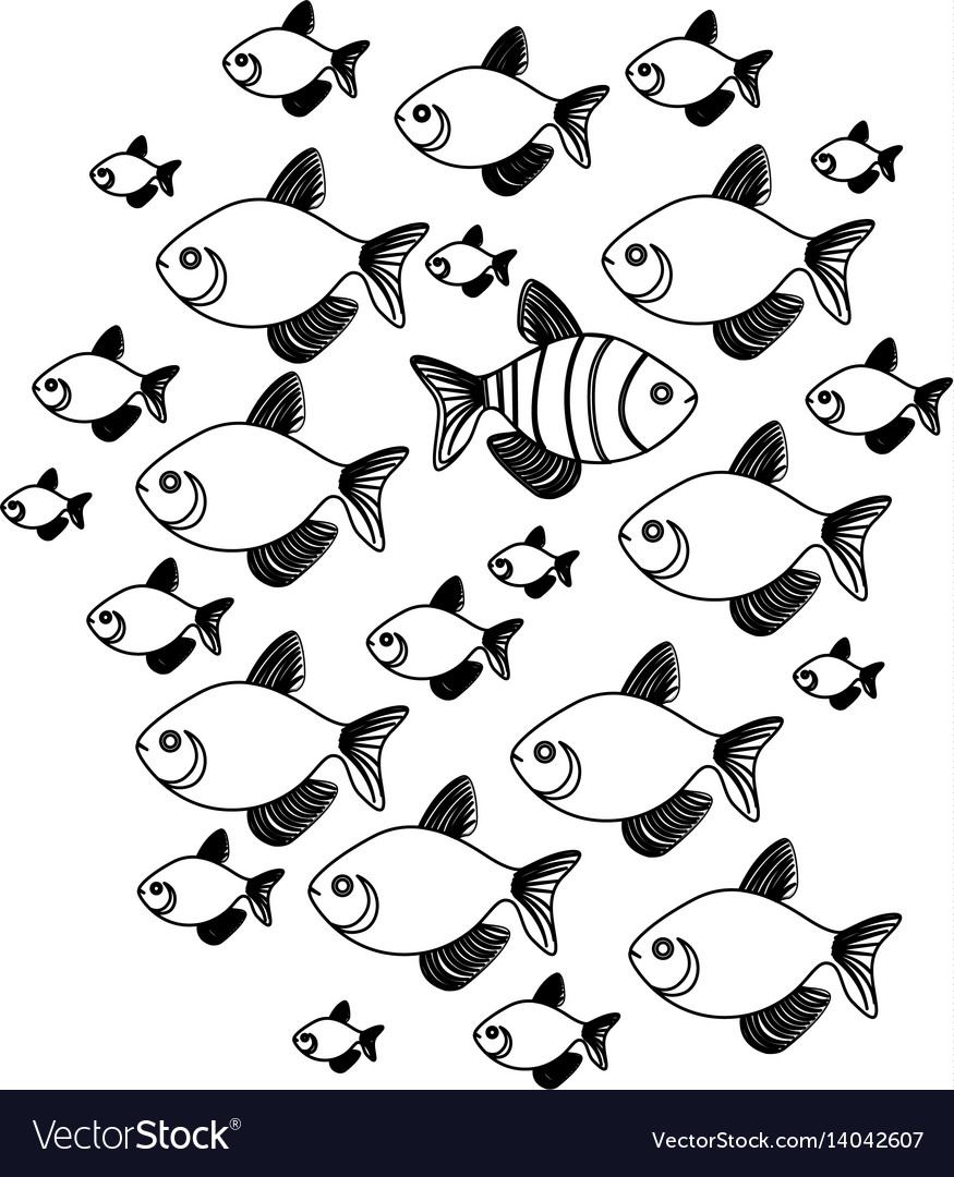 Silhouette set collection fish aquatic animal with vector image