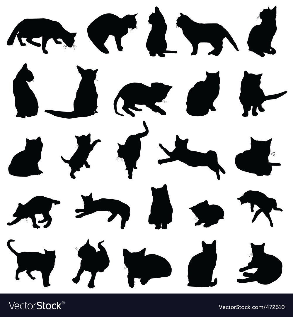 cat design royalty free vector image vectorstock