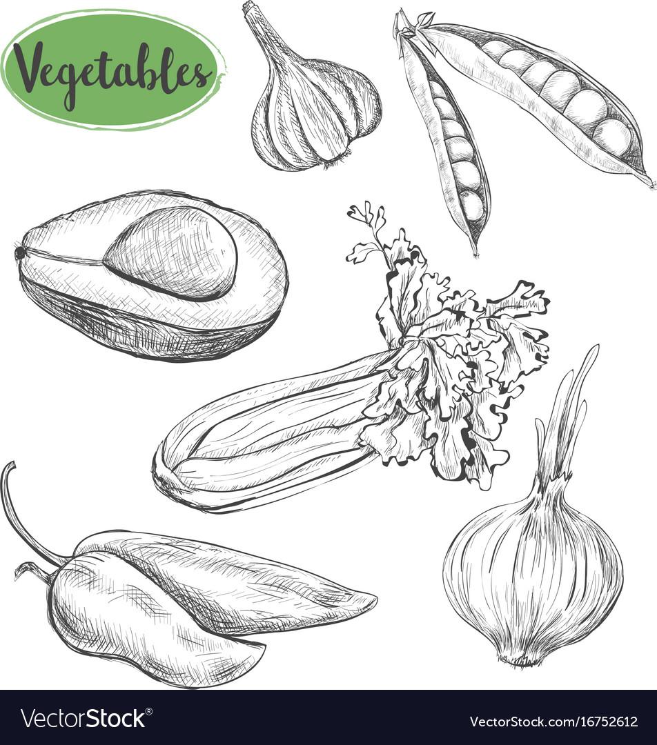 Vegetables sketch set vector image