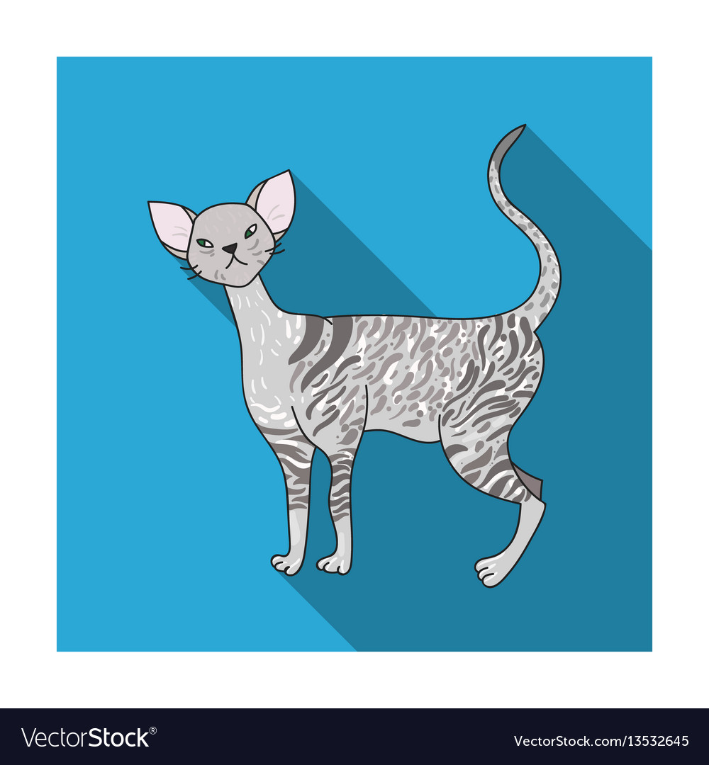 Cornish rex icon in flat style isolated on white vector image