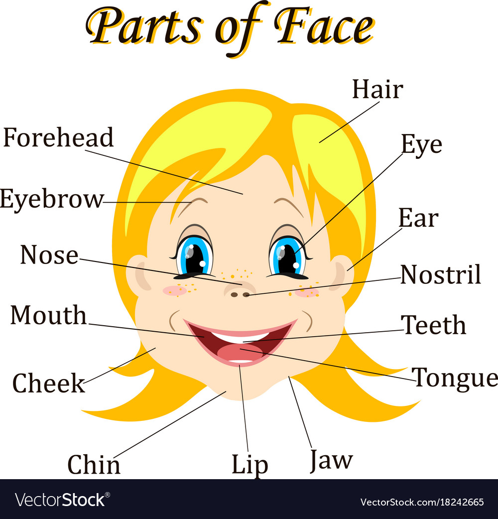 Part Of Art : Cartoon child girl vocabulary of face parts vector image