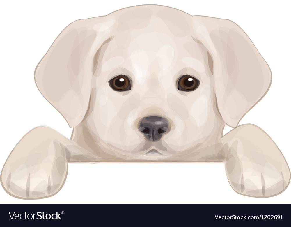 Puppy vector image