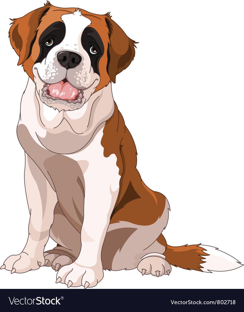 St bernard dog vector image