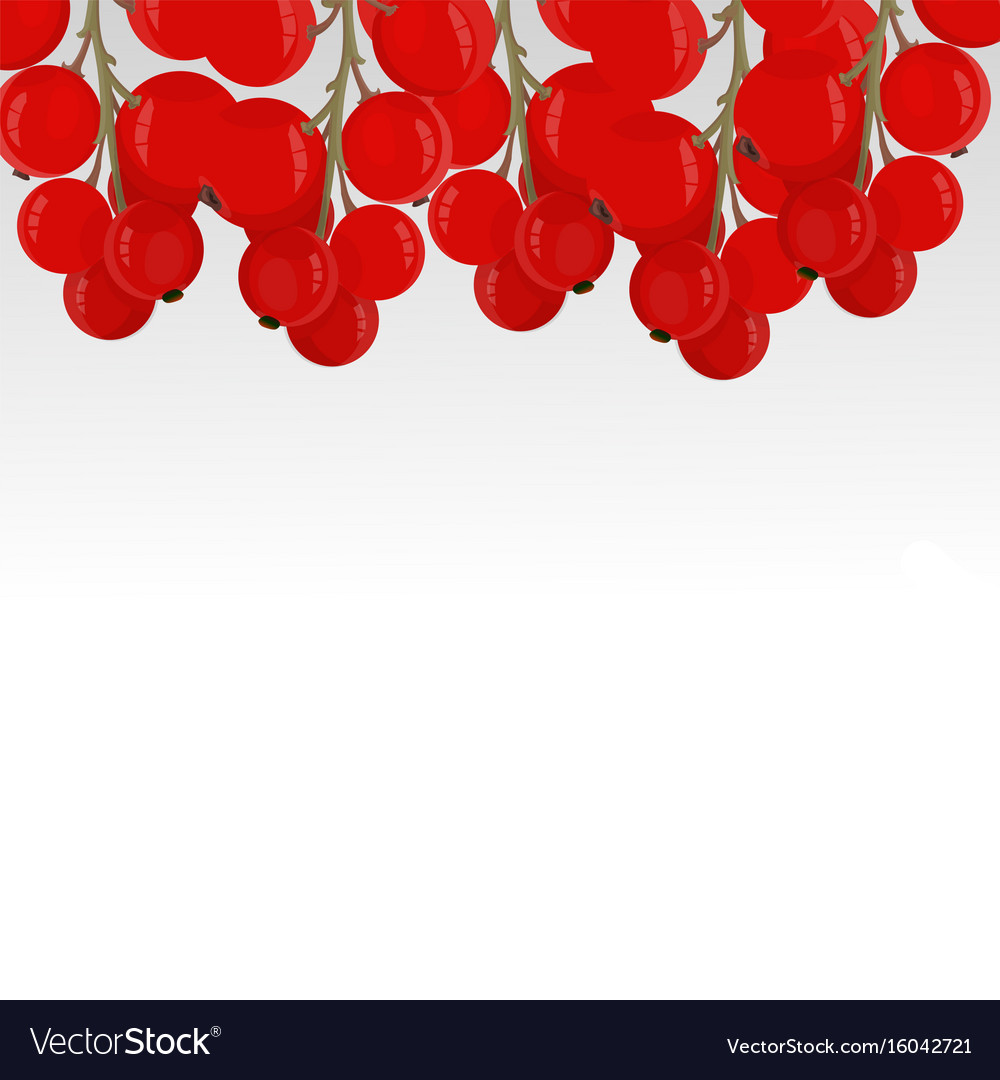 Green twigs of red currant hanging from above vector image
