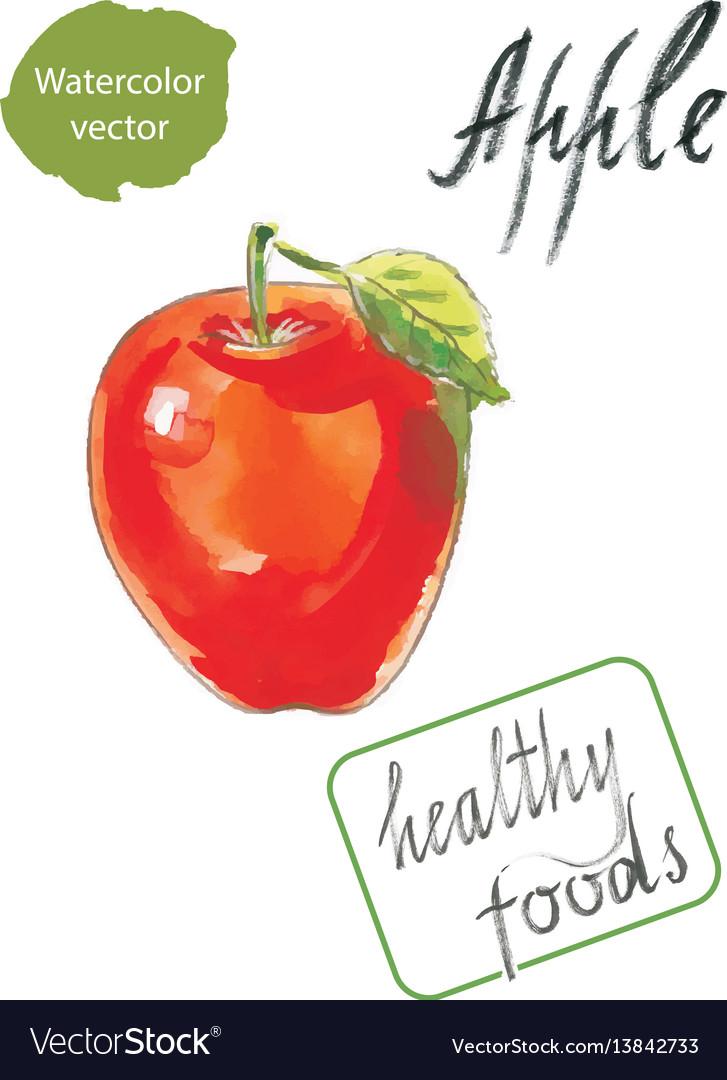 Watercolor apple watercolor vector image