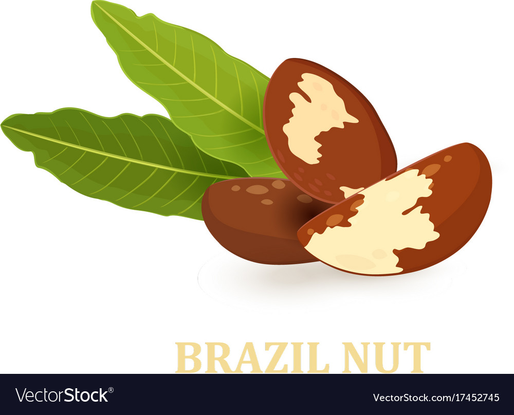 Heap of brazil nuts with leaves for your design vector image