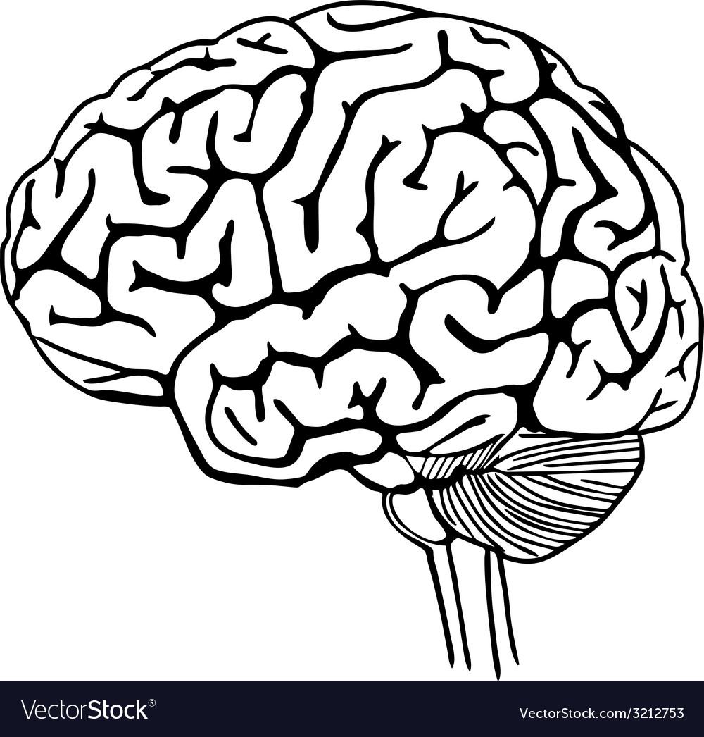 Brain outline vector image