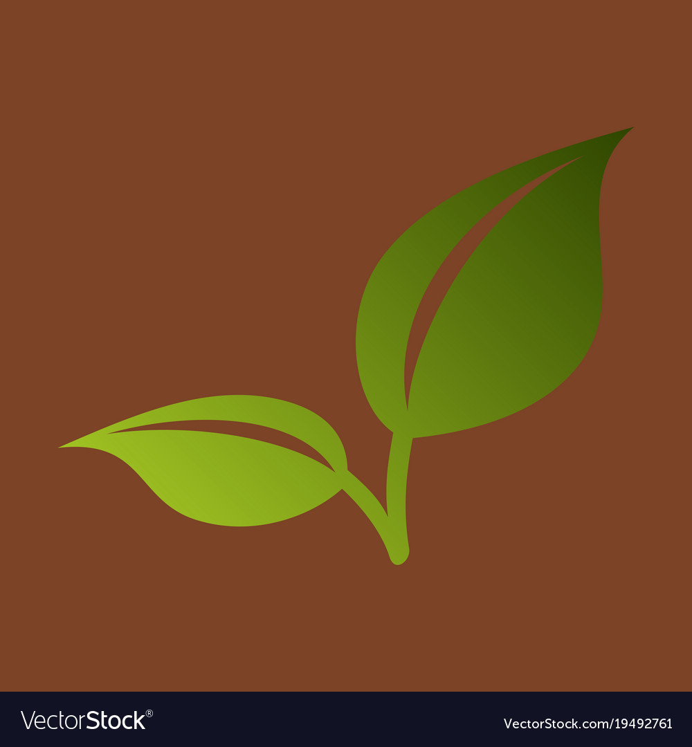 Fresh mint leaf flat menthol healthy aroma herbal