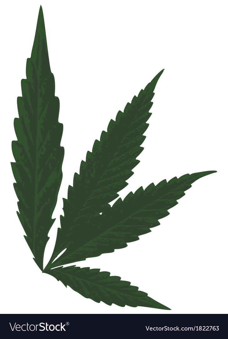 marijuana leaf royalty free vector image - vectorstock
