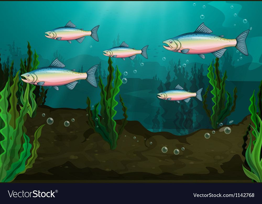 A school of fish vector image