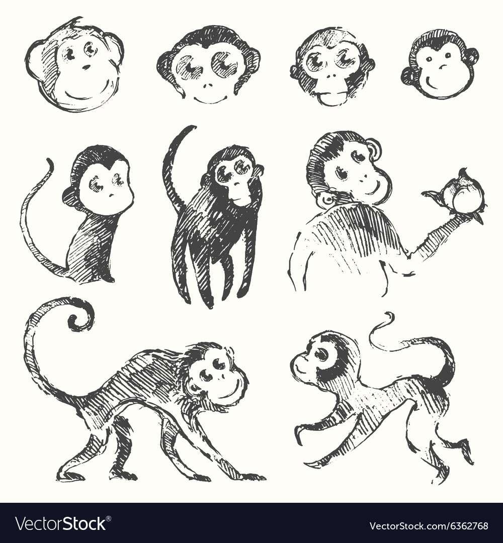 set funny monkey new year chinese drawn sketch vector image