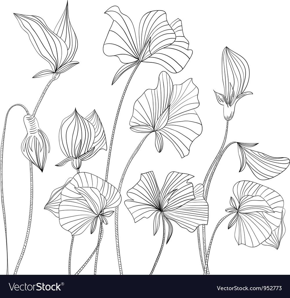 Monochrome Sweet pea flowers vector image