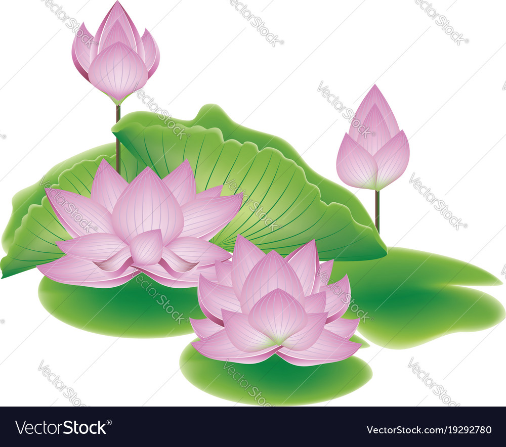 Lotus flower with leaves royalty free vector image lotus flower with leaves vector image izmirmasajfo Gallery