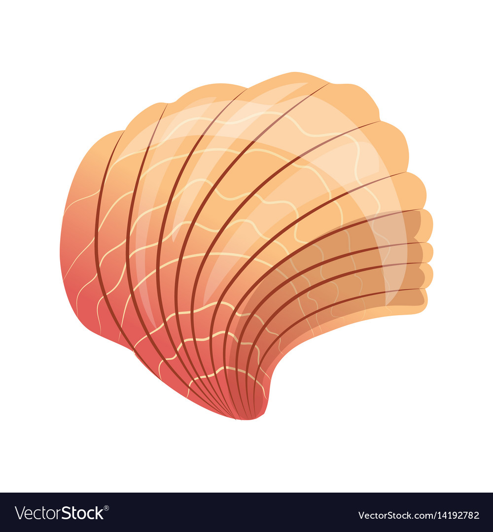 Scallop seashell an empty shell of a sea mollusk vector image