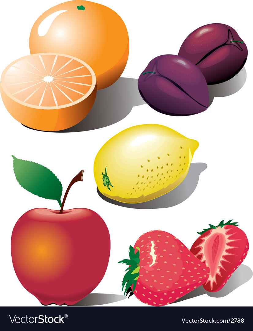 Fruit illustration vector image