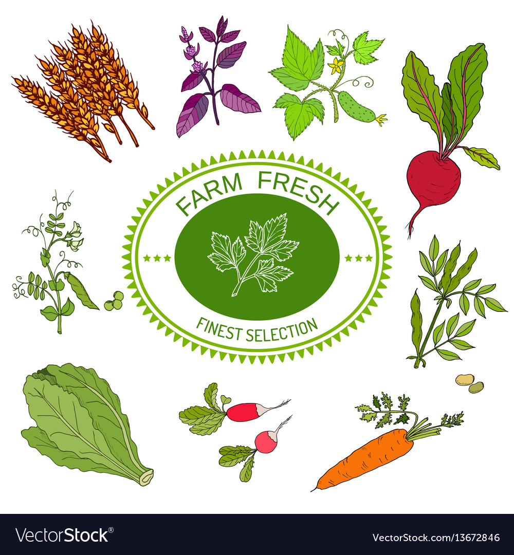 Farmers food design logo and vegetables vector image