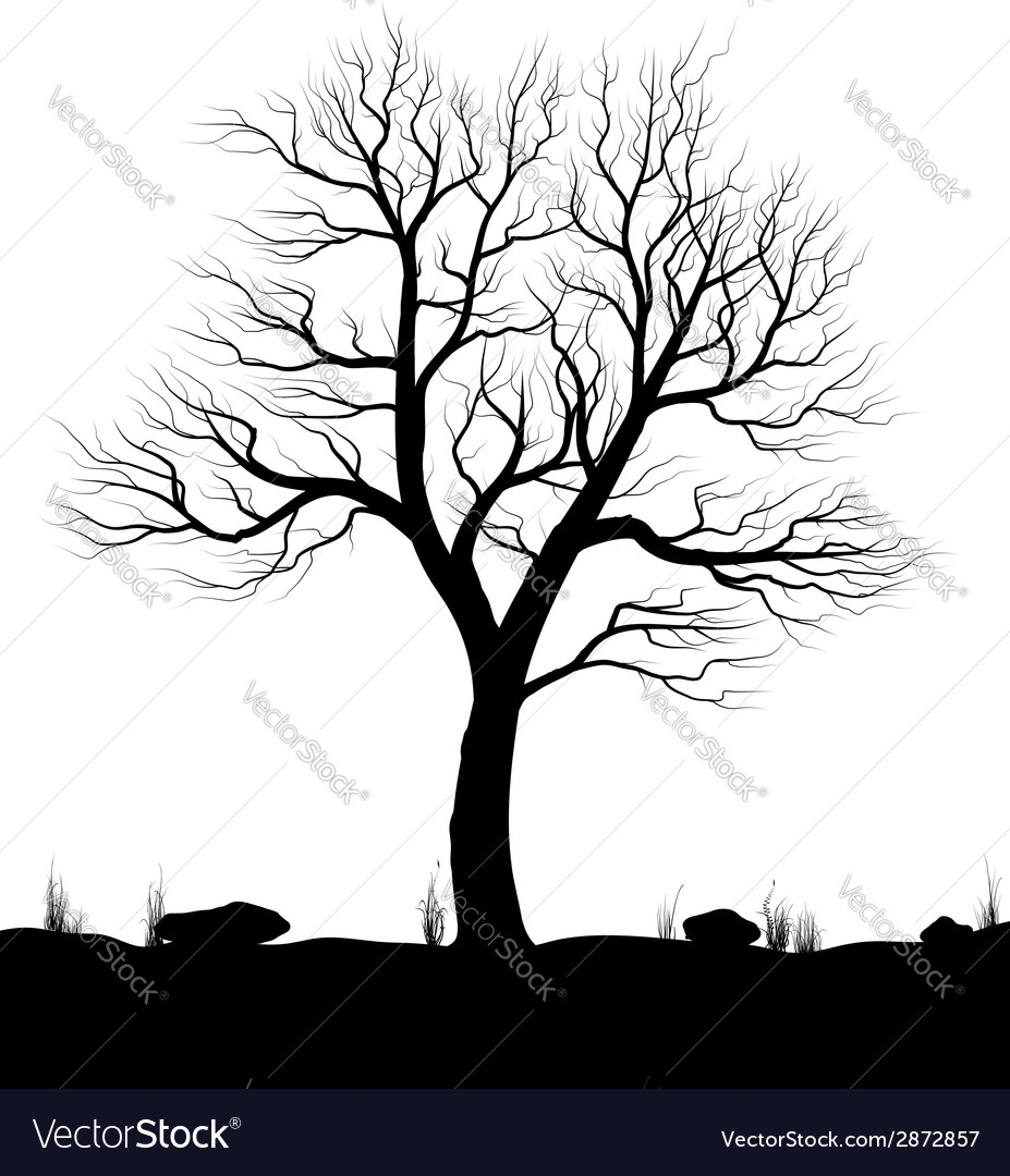 Landscape with old tree and grass over white vector image