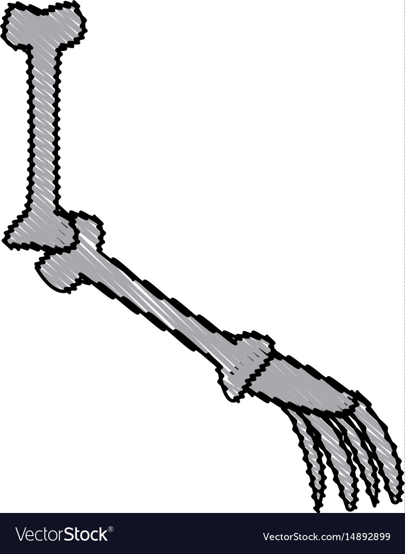 Cartoon arm bone part skeleton comic vector image