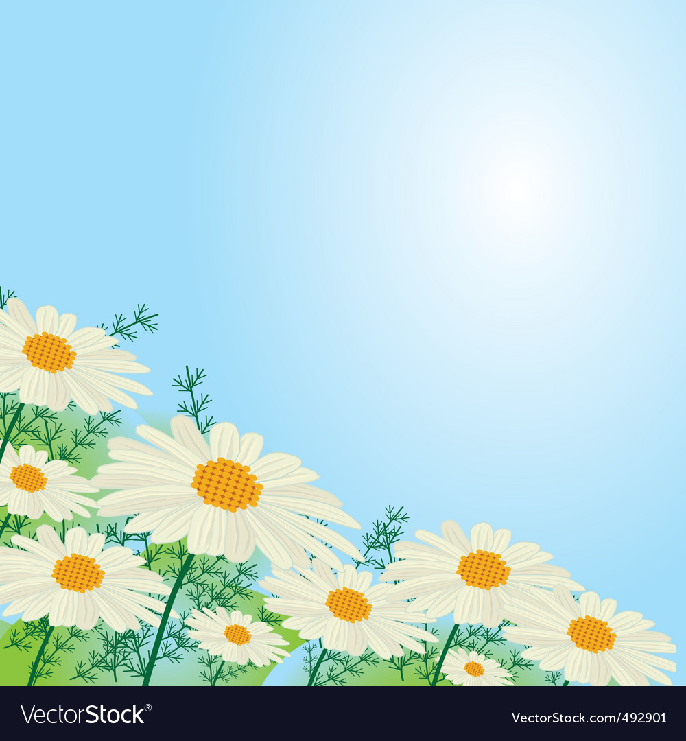 Chamomile flowers against the sky vector image