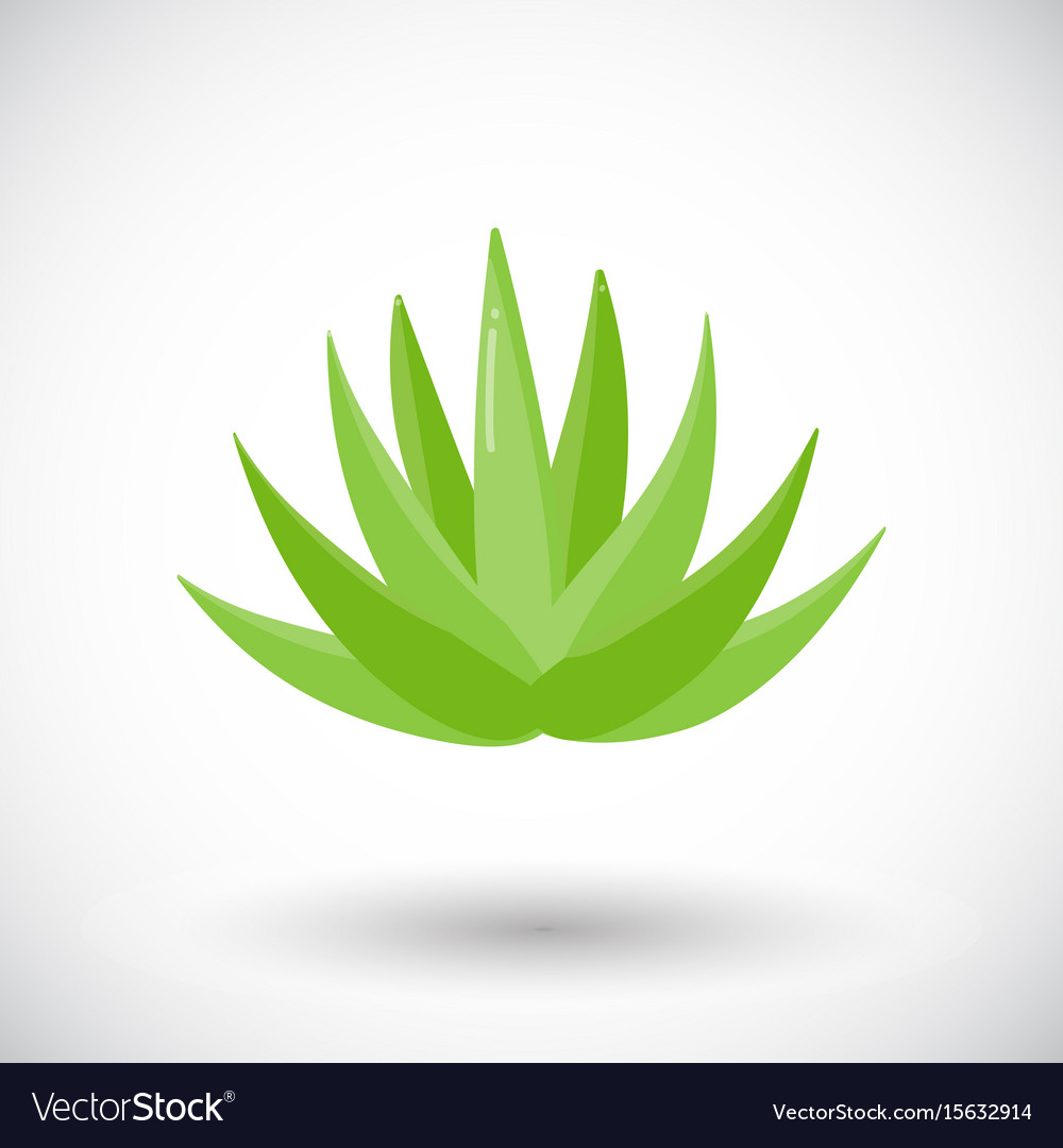Agave plant flat icon vector image