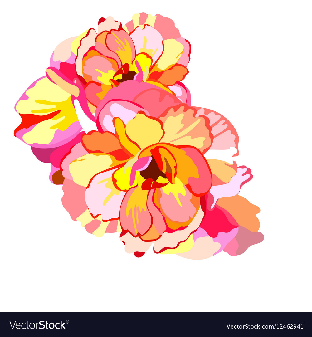 Watercolor Colorful Summer flowers vector image