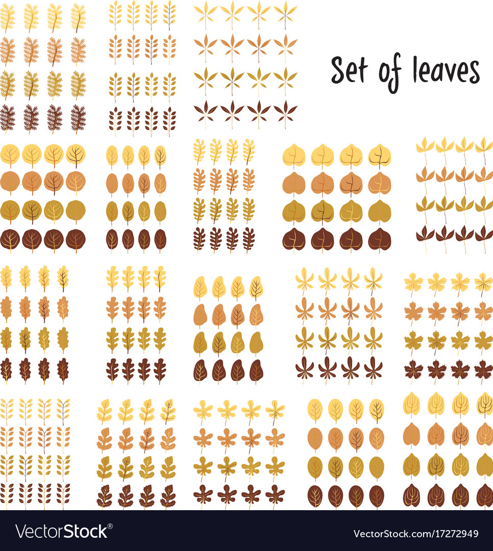 Set of leaves cartoon leaf vector image