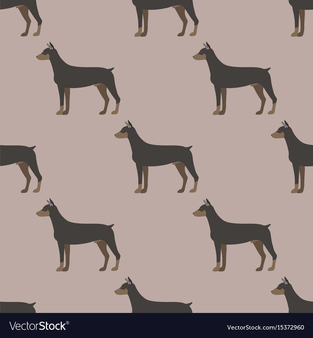 Funny cartoon doberman dog character bread vector image
