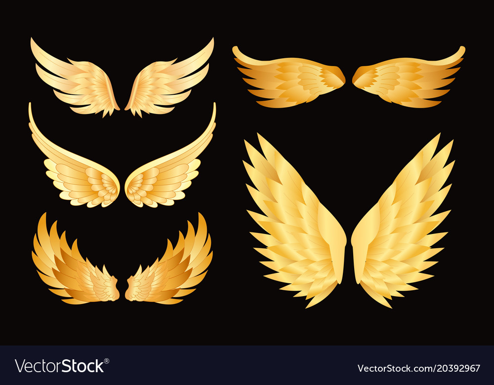 Set of different golden wings vector image