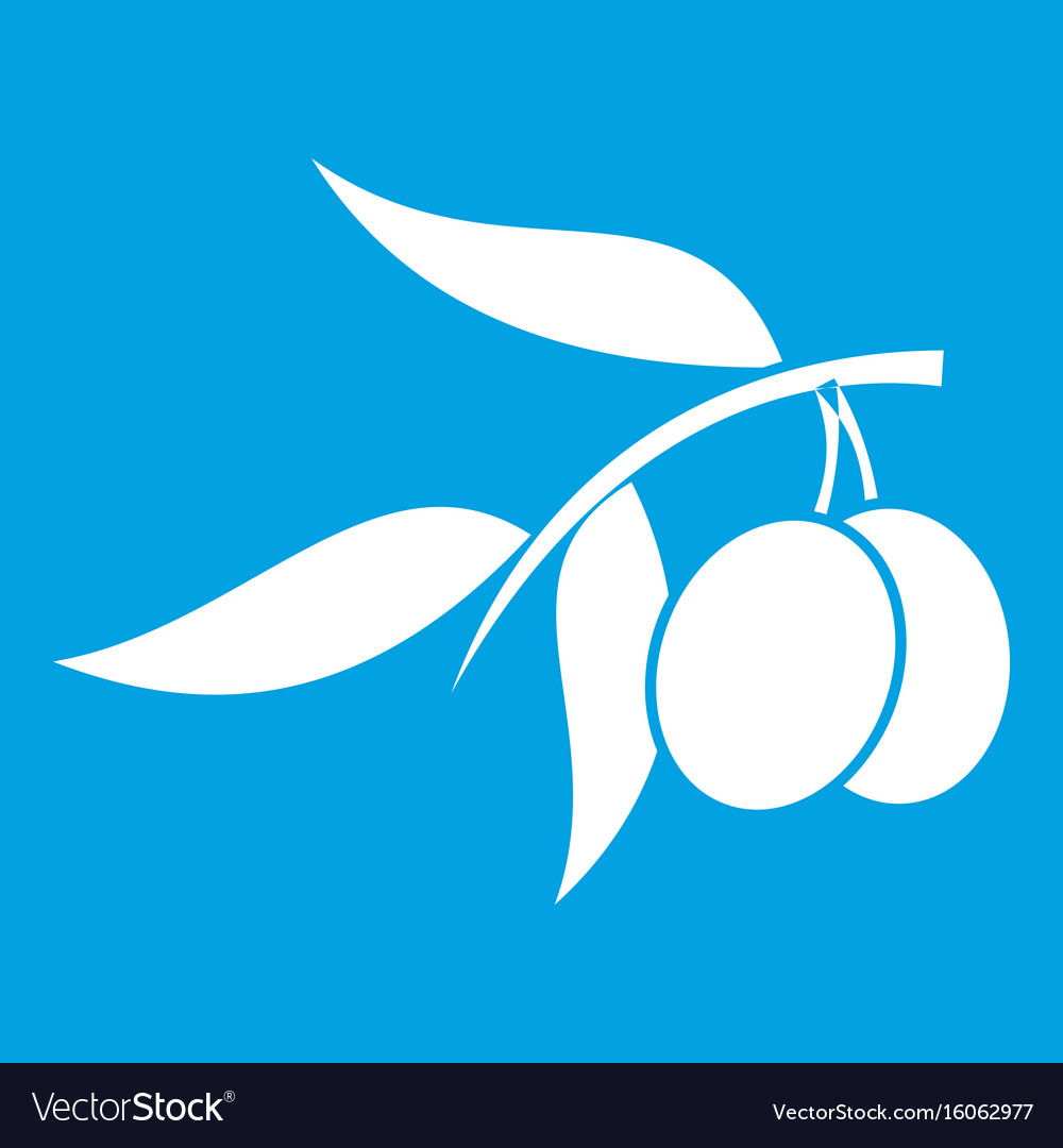 Olive tree branch with two olives icon white vector image