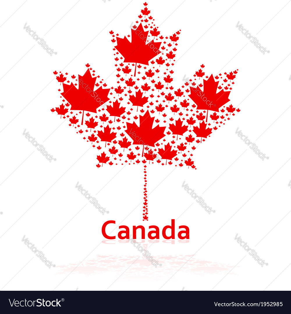 Canadian maple leaf Royalty Free Vector Image - VectorStock