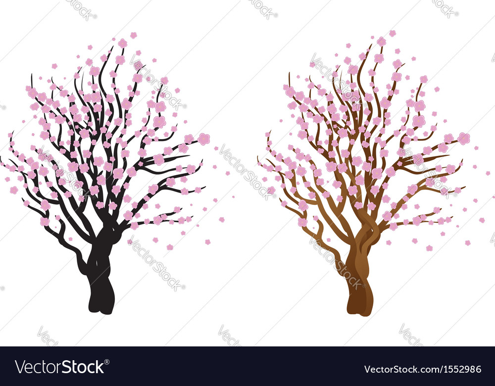 Cherry with blossom vector image