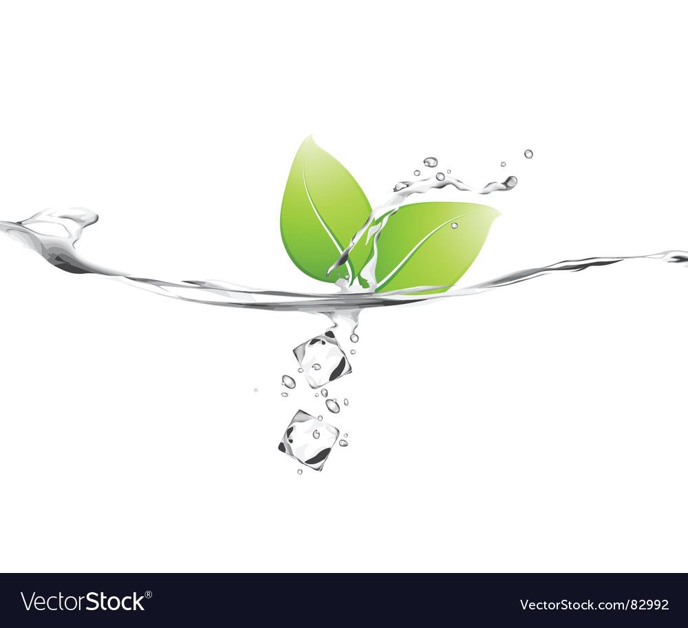 Leaf splash vector image
