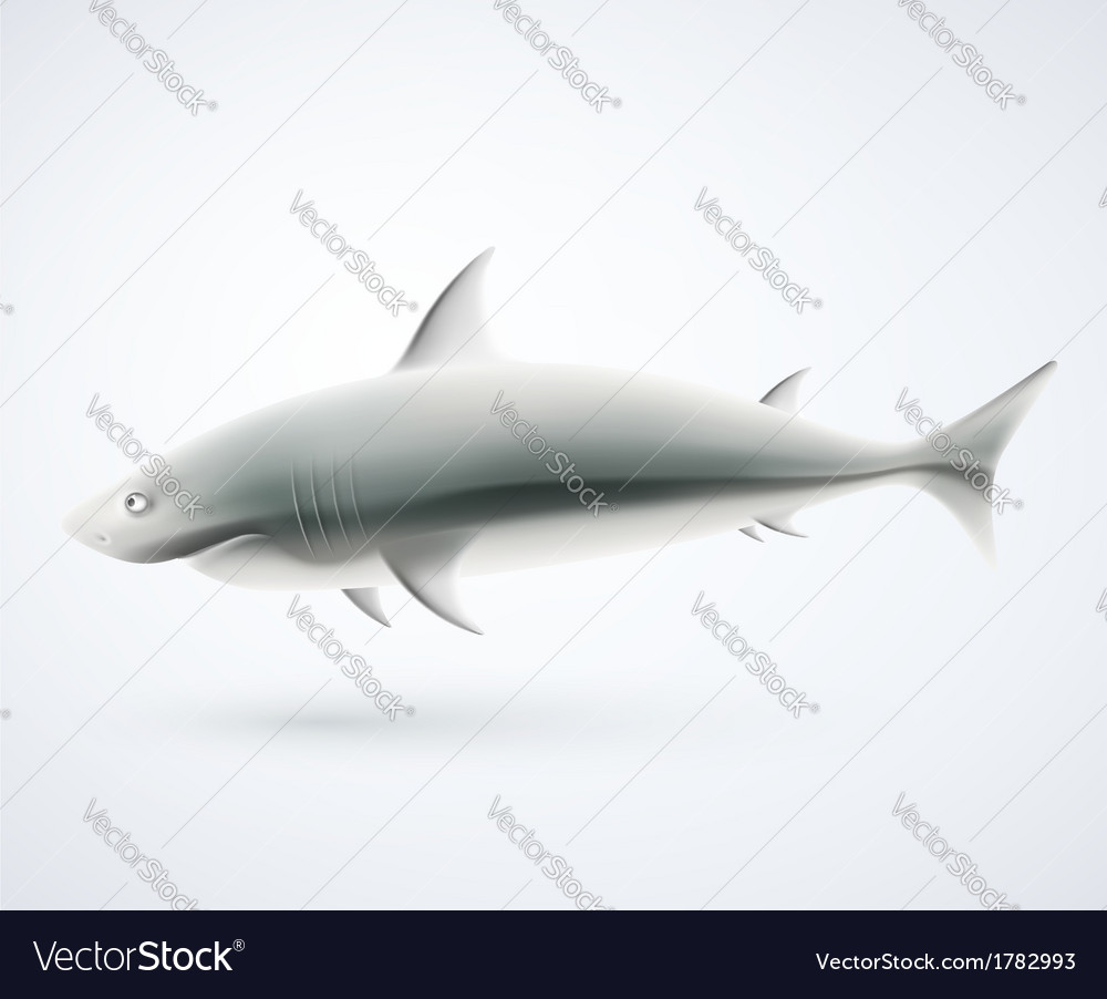Isolated shark vector image