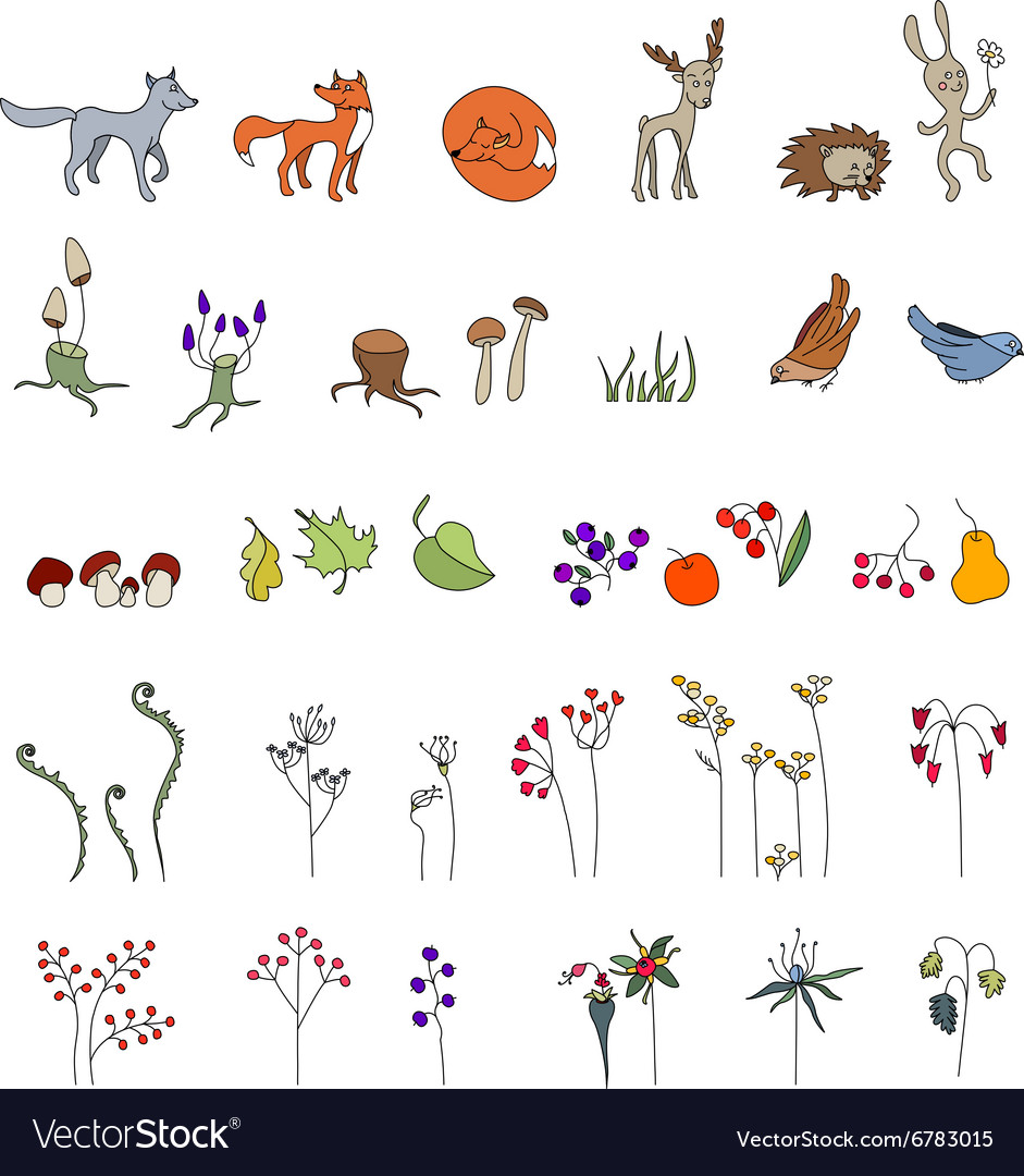Set with cute animals Wildlife Forest mushrooms vector image