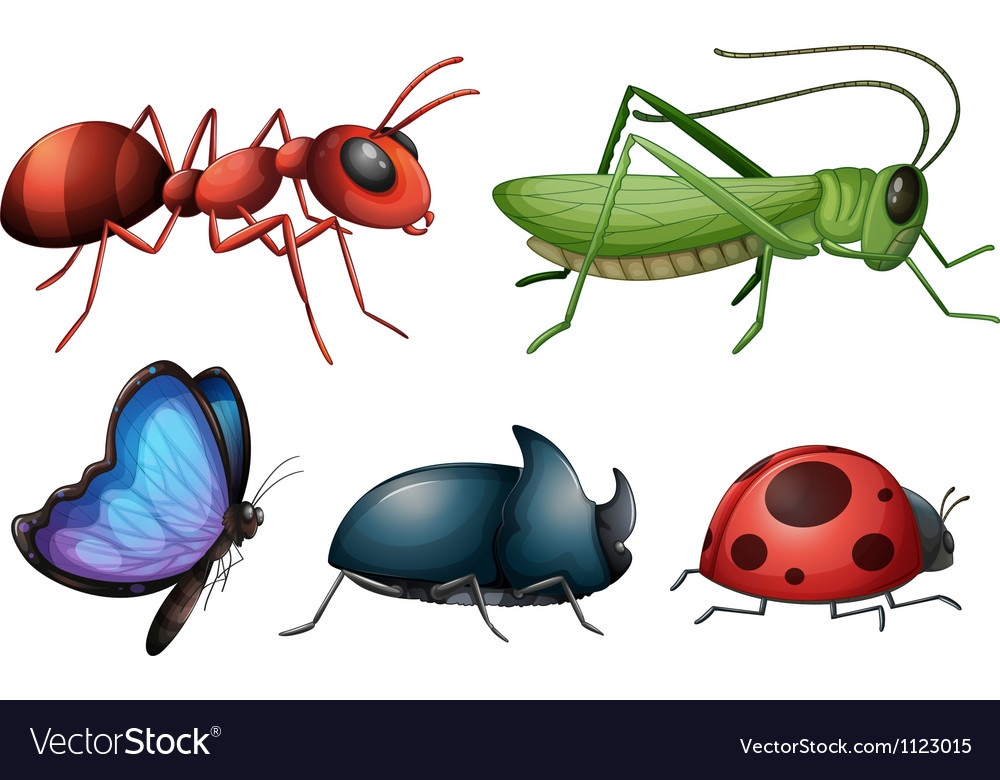 Various insects and bugs vector image