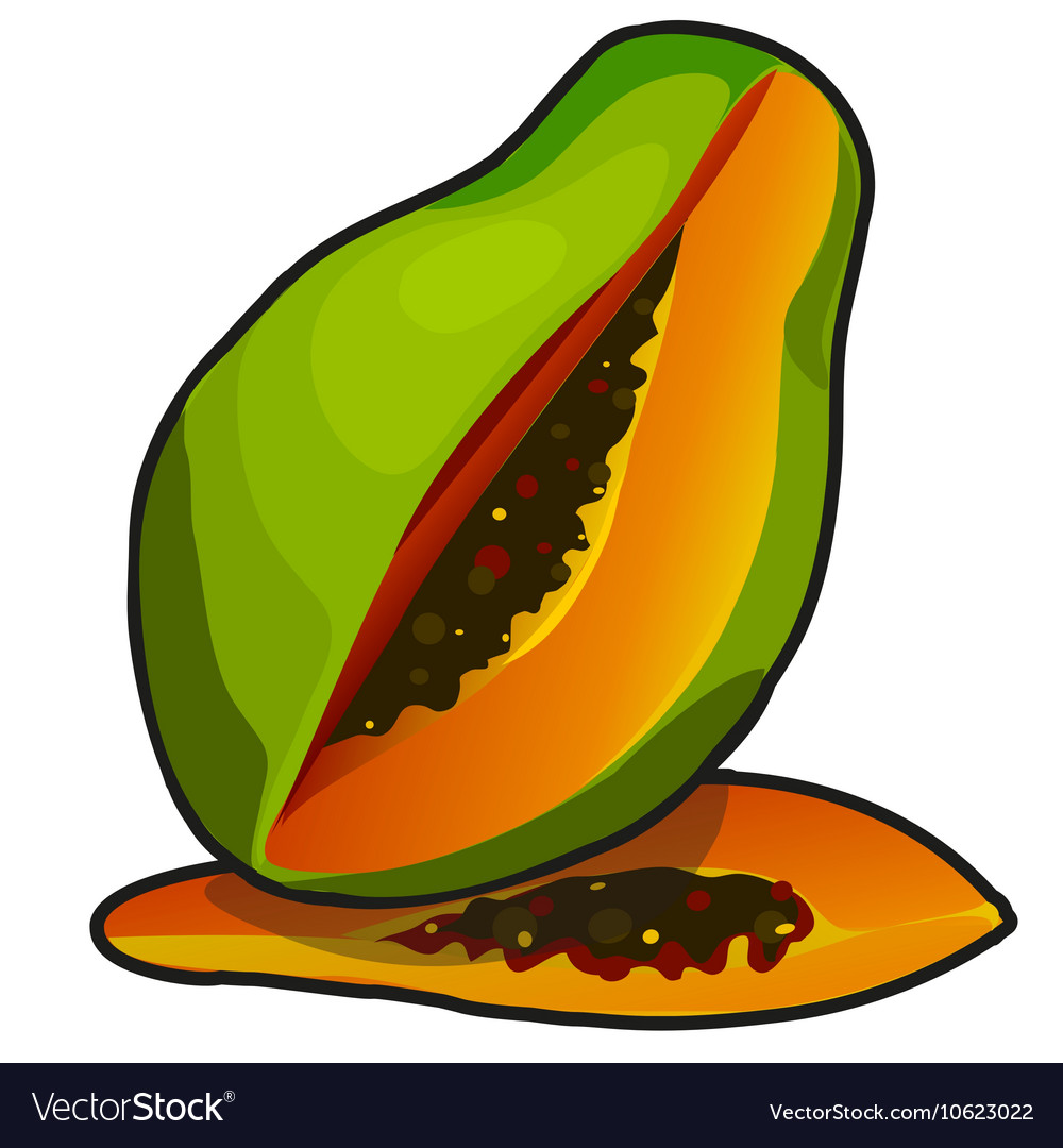 Exotic fruit papaya in cartoon style vector image