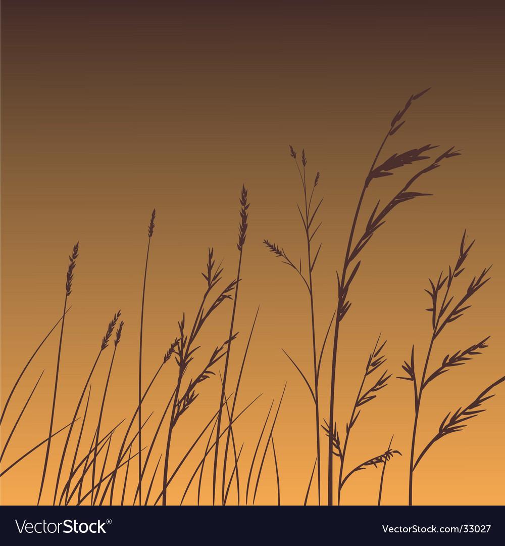 Plants dance at dawn vector image