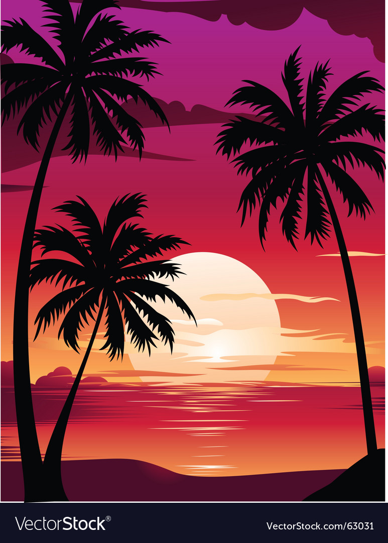 Sunset with palm vector image