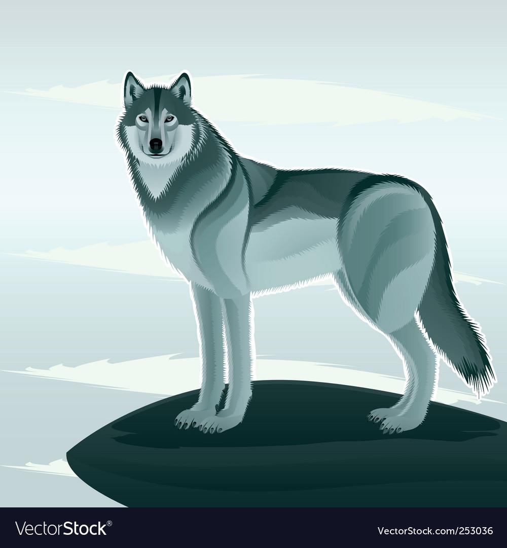 Beautiful wolf vector image