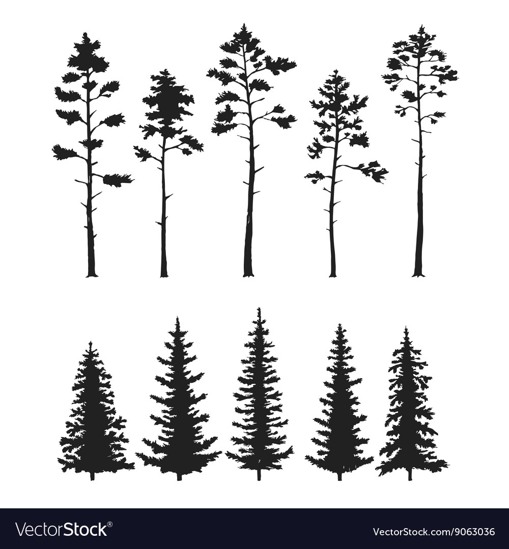 Set with pine trees isolated on white vector image