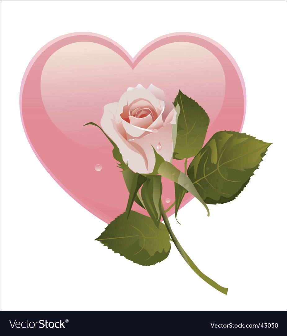 Simple rose and heart vector image
