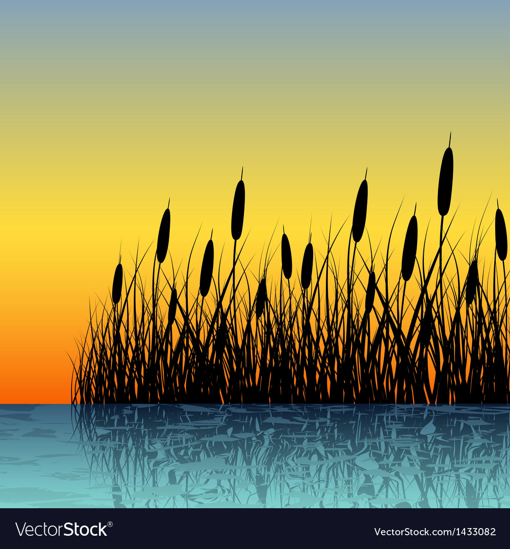 Reed silhouette with water reflection vector image