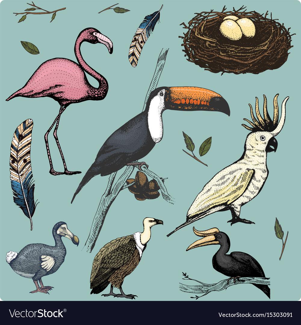 Hand drawn realistic bird sketch graphic vector image