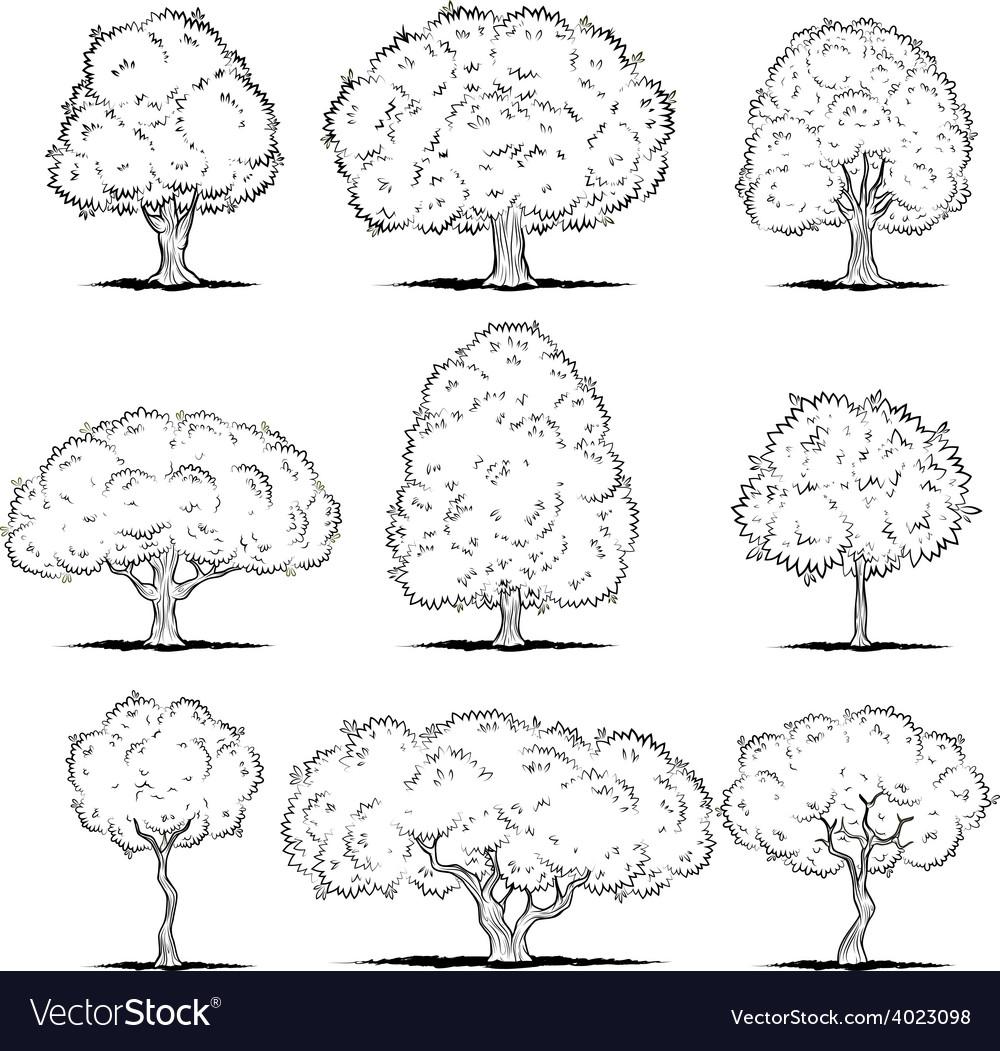 Set of deciduous trees Line art vector image